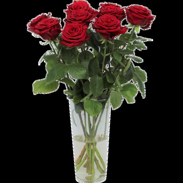 Roser 'Romantic Red'