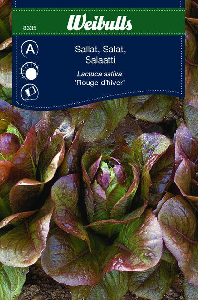 Salat 'Rouge D'Hiver'