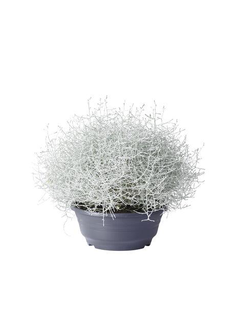 Sølvtråd, Ø23 cm, Grå