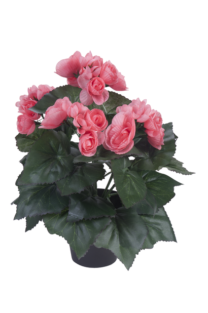 Begonia kunstig, Høyde 32 cm, Flere farger