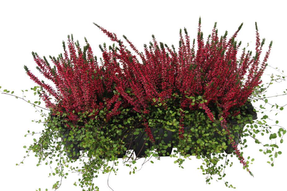 Høstmiks balkongkasse, Ø55 cm, Flerfarget