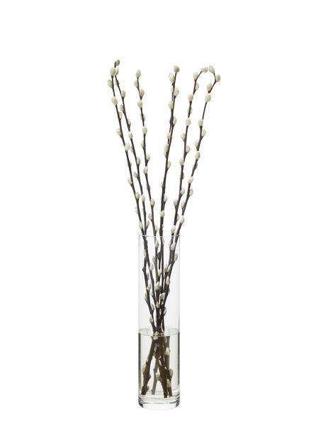 Salix/Forsythia, Høyde 50 cm, Flere farger