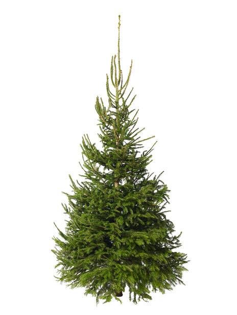 Juletre, Pure Nature, Høyde 200-250 cm, Grønn