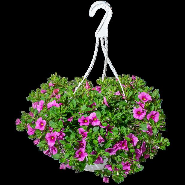 Småblomstret petunia i ampel