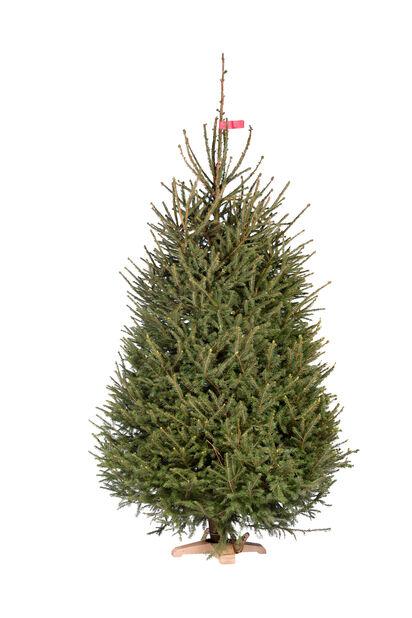 Strålende Juletre 200-2 Høyde 250 cm Grønn | Plantasjen MF-75