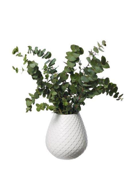 Eucalyptus, Høyde 50 cm, Grønn