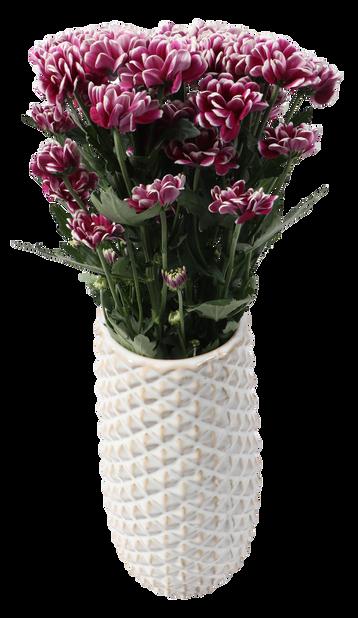 Chrysantemum 3 pk