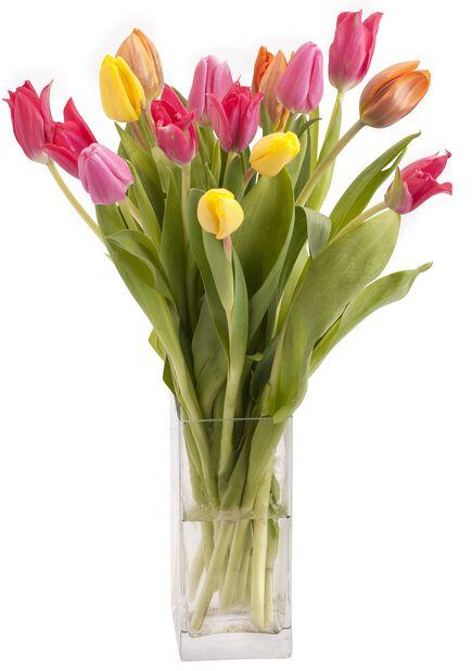 Premium tulipaner, Høyde 38 cm, Flere farger