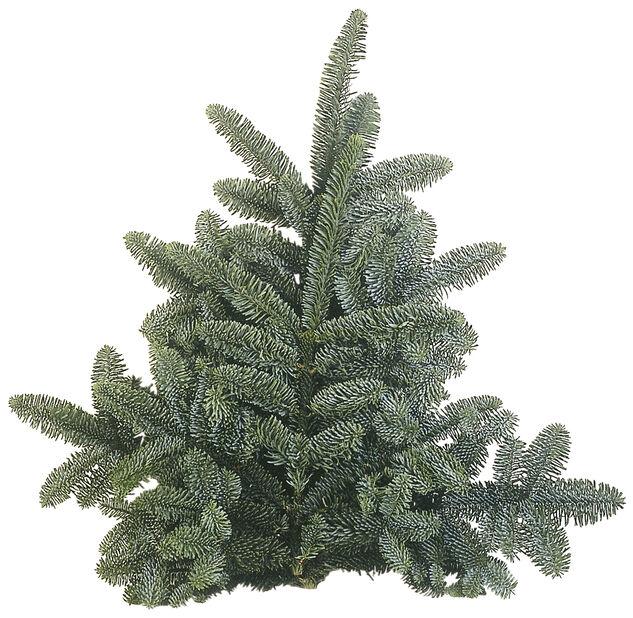 Granbukett nobilis, Høyde 40 cm, Grønn