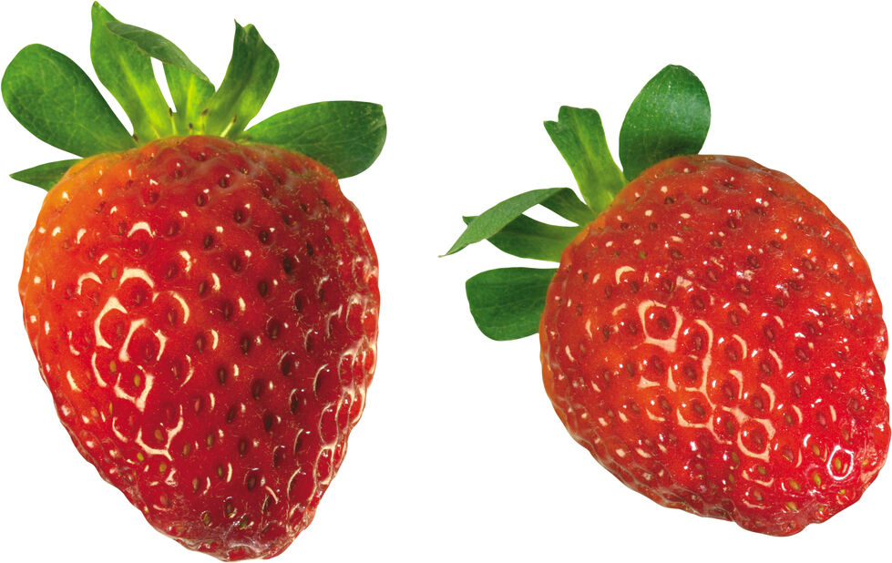 Jordbær 'Honeoye', 6 pk, Hvit