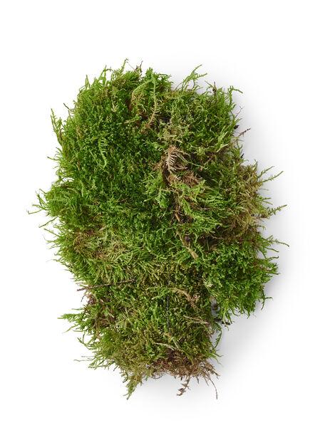 Grønn mose, Høyde 25 cm, Grønn