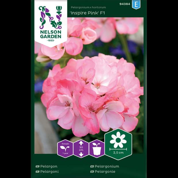Pelargonium 'Inspire Pink' F1, Flerfarget
