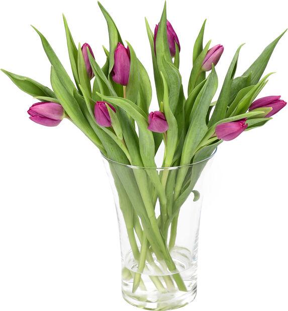 Tulipaner 10pk, Høyde 40 cm, Flere farger