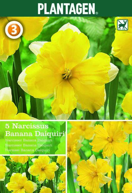 Påskelilje 'Banana Daiquiri', Gul