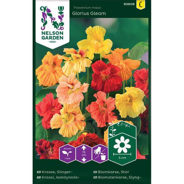 Stor blomkarse 'Glorius Gleam', Flerfarget