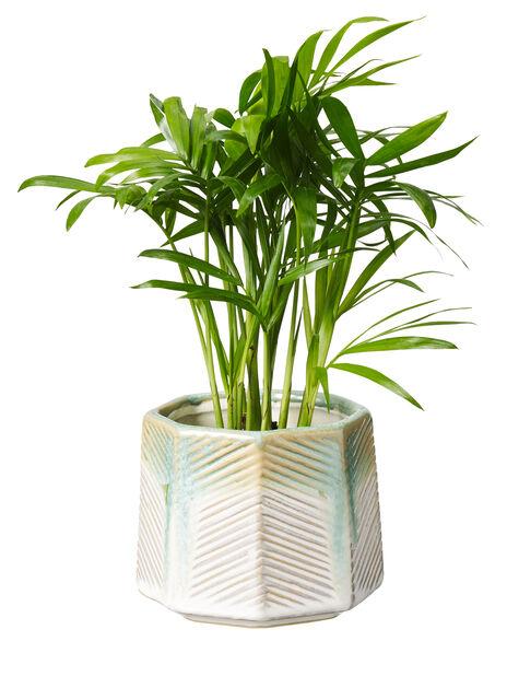 Mini grønnplante , Høyde 7 cm, Grønn