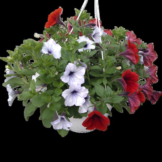 Petunia, Ø27 cm, Flerfarget
