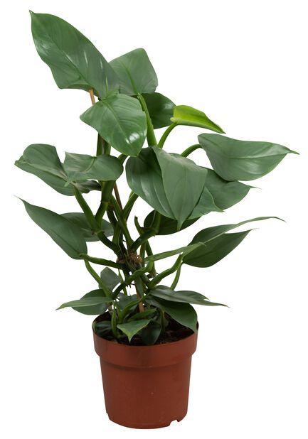 Treklatrer, Høyde 40 cm, Grønn