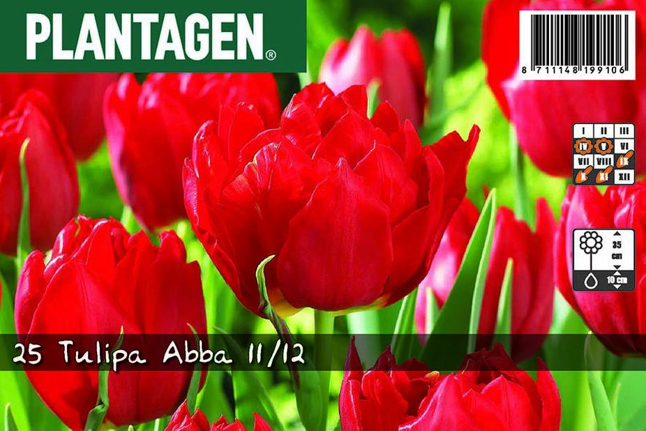 Tulipan 'Abba', Rød