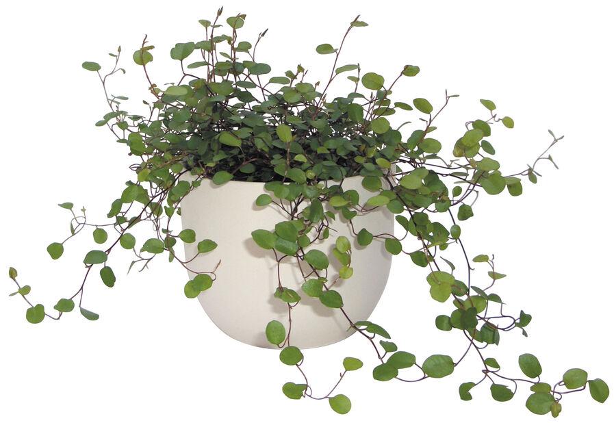 Pletter i luften , Høyde 10 cm, Grønn