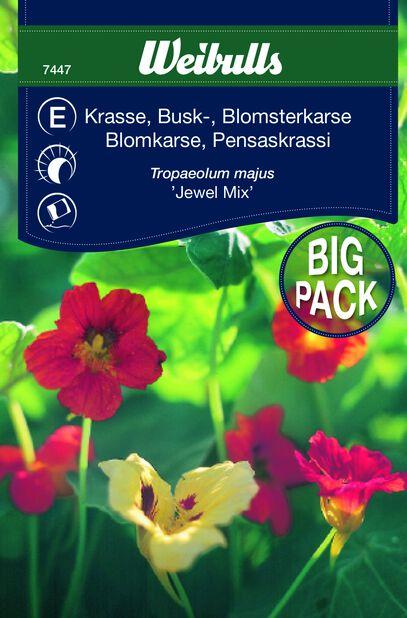 Blomkarse busk Juwel Mix