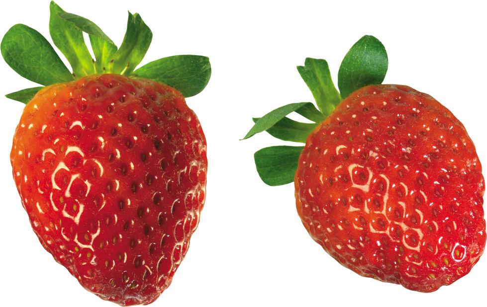 Jordbær 'Delizz' 6 cm, Ø6 cm, Hvit