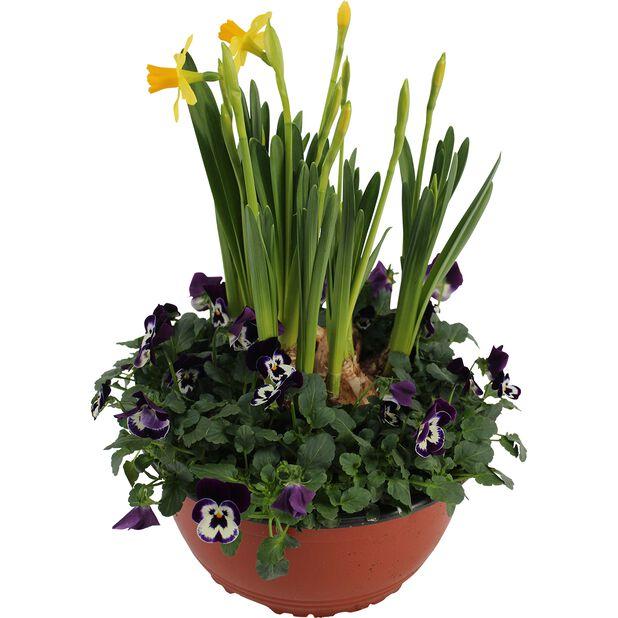 Stemorsblomster og påskeliljer i skål, Ø23 cm, Flerfarget