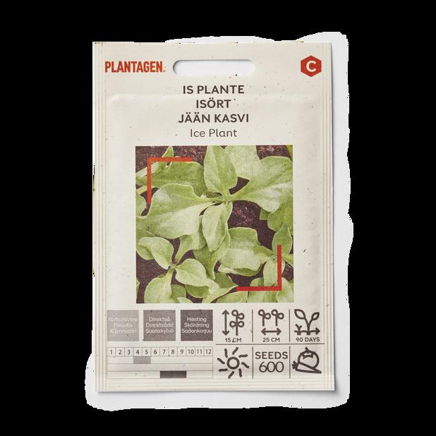 Is plante 'Ice Plant'