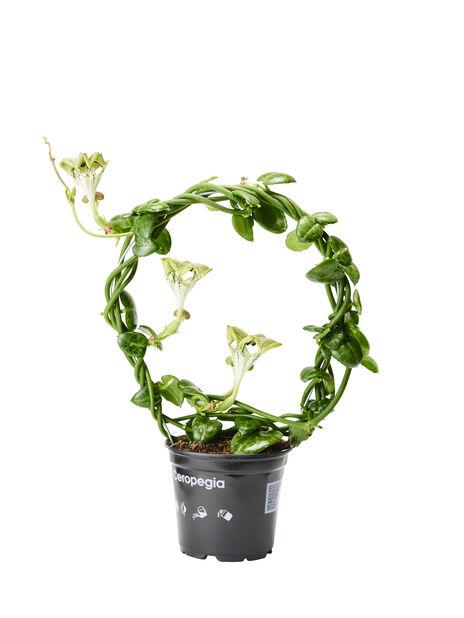 Marmorlanterne, Høyde 45 cm, Grønn