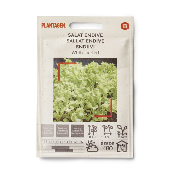 Salat endive 'White curled'