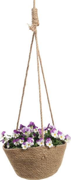Ampel med stemorsblomster, Høyde 30 cm, Flere farger
