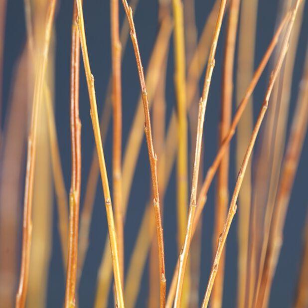 Flettet pil, Høyde 60 cm, Grønn