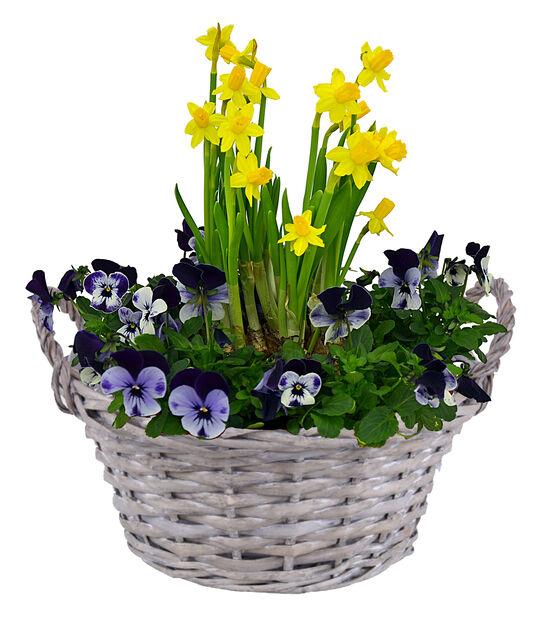 Stemor blå og påskelilje i skål