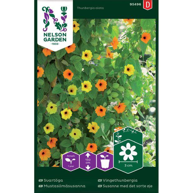 Vingethunbergia , Flerfarget