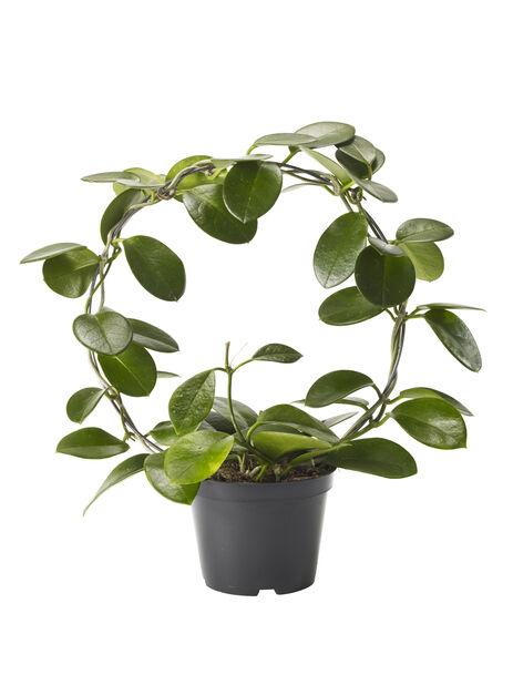 Porselensplante på bøyle, Høyde 40 cm, Grønn