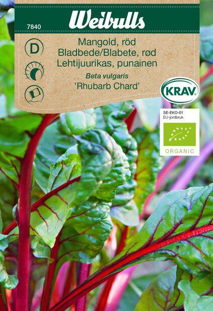 Bladbete 'Rhubarb Chard' KRAV