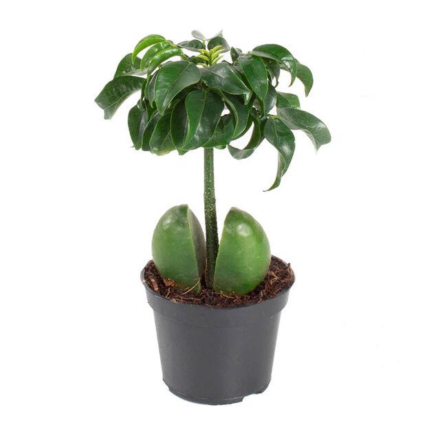 Mini grønn planter mix, Høyde 12 cm, Grønn
