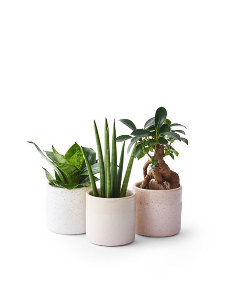 Green plants mix Easy Care 6cm