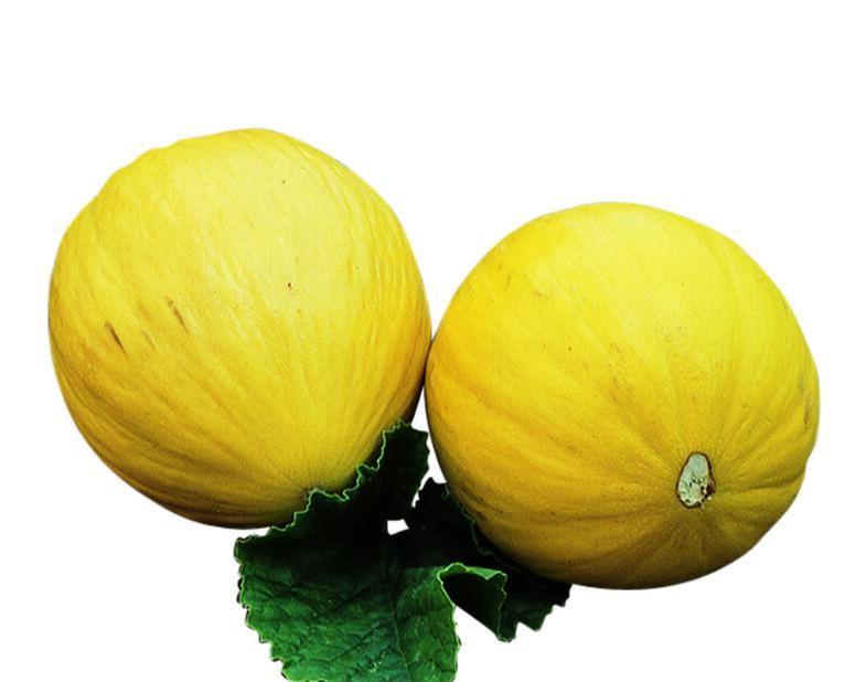 Honningmelon 'Sweet Heart', Ø10.5 cm, Oransje