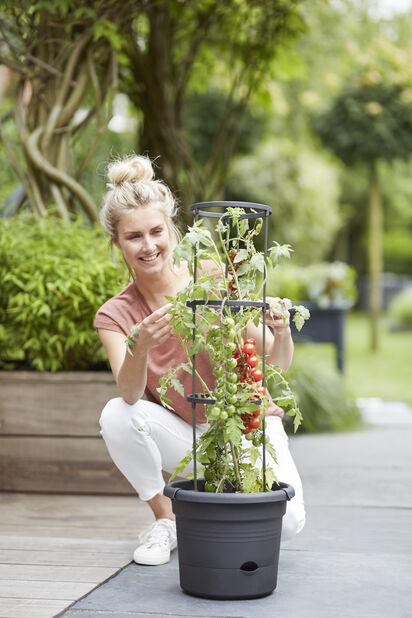 Tomatpotte ELHO Green Basics, Lengde 33 cm, Svart