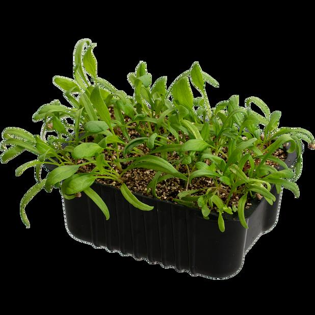 Spinat, Ø14 cm, Grønn