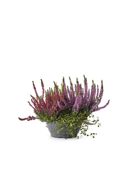 Høstmiks skål , Ø23 cm, Flerfarget