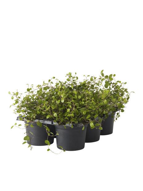 Pletter i luften, Høyde 10 cm, Grønn