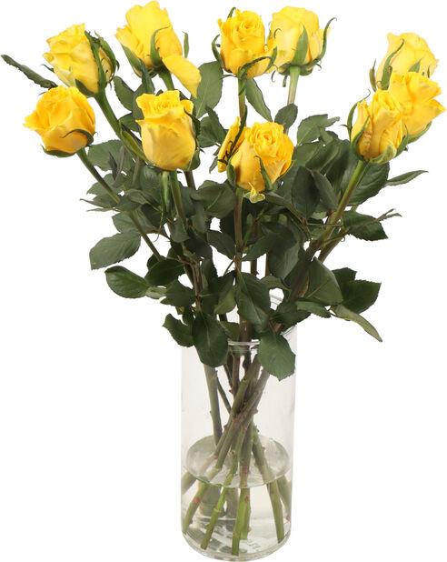 Roser premium Fairtrade 10pk, Høyde 50 cm, Gul