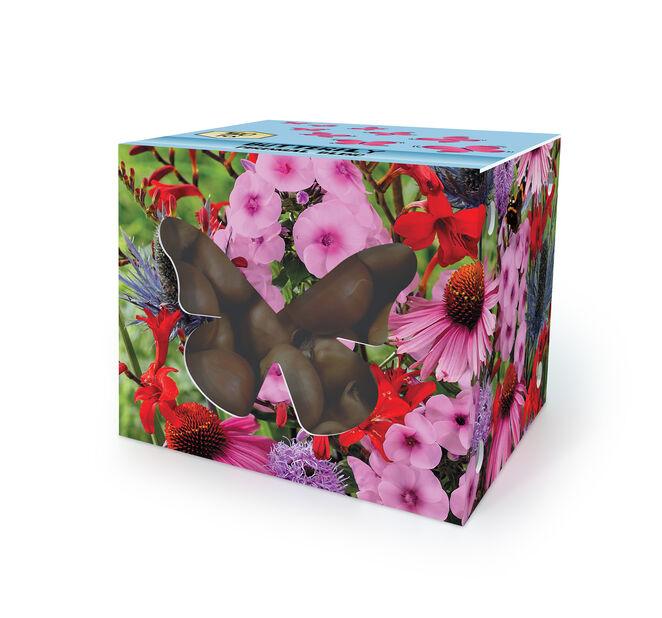 Blomsterløk for sommerfugler, Flerfarget