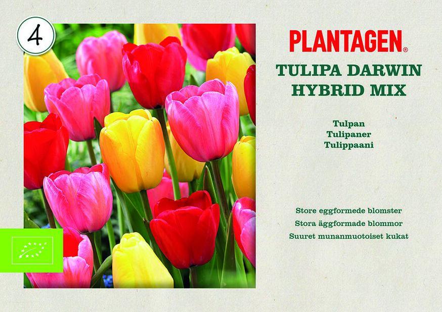 Darwin hybrid tulipanmiks ØKO, Flerfarget