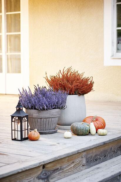 Planteskål Kelly med fat, Ø38 cm, Grå