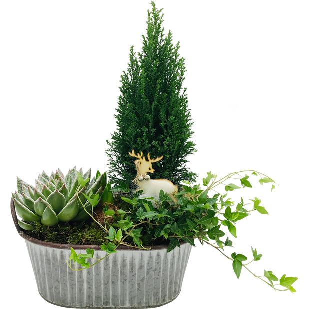 Plantegruppe Olof