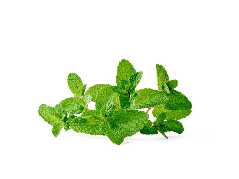 Grønnmynte, Ø14 cm, Grønn