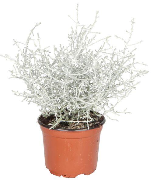 Sølvtråd, Ø10.5 cm, Grå